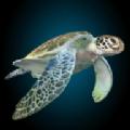 海龟模拟器手机版
