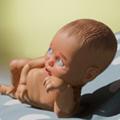 基因编辑婴儿模拟器游戏