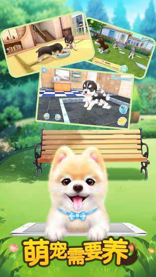 萌宠需要养官方正式版版游戏下载地址图1: