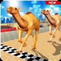 骆驼模拟器修改版