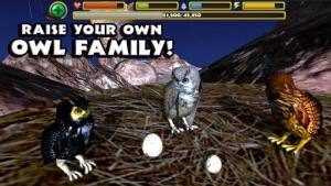终极猫头鹰模拟器破解版图4