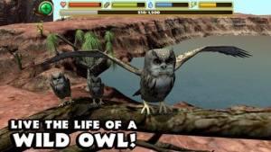 终极猫头鹰模拟器破解版图1