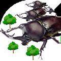 甲虫之间的战斗中文版