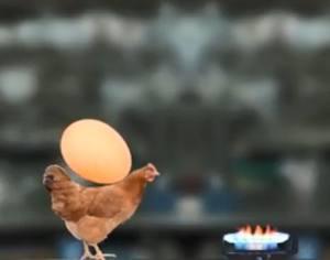 母鸡护蛋模拟器中文版图3