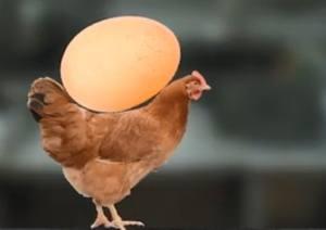 母鸡护蛋模拟器中文版图5