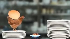 母鸡护蛋模拟器中文版图2