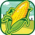 丰收的玉米游戏