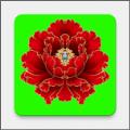 绿植花卉APP