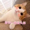 撩人小貓咪表情包app