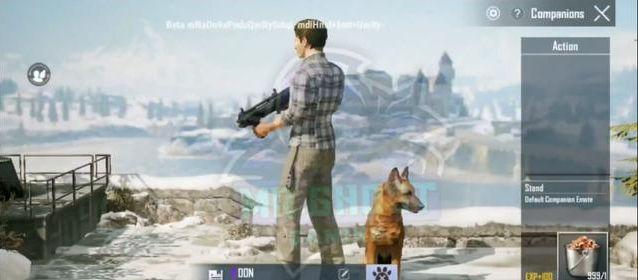 和平精英宠物狗有什么用?SS6赛季宠物狗介绍[多图]
