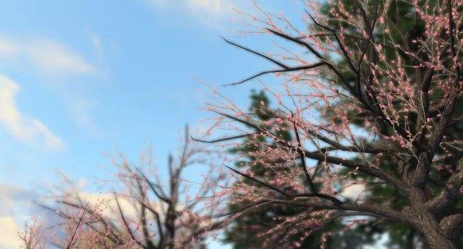 明日之後快樂101櫻花樹在哪裡?末世櫻花方位和玩法介紹[視頻][多圖]圖片2