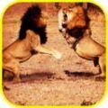 非洲狮模拟器破解版