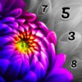 照片编号游戏中文版安卓版 v1.0
