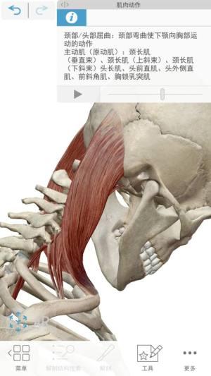 2021人体解剖学图谱破解版图2