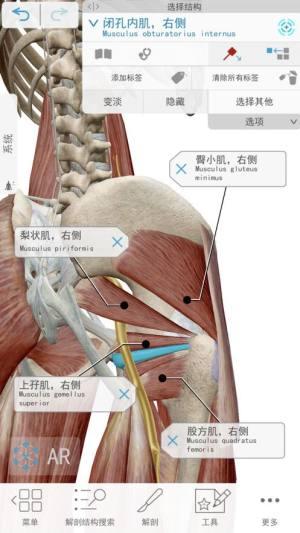 2021人体解剖学图谱破解版图4