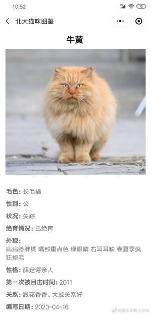 北大猫咪图鉴APP图2