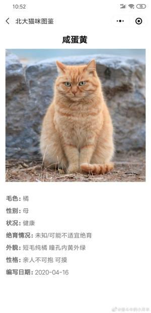 北大猫咪图鉴APP官方小程序入口图片1
