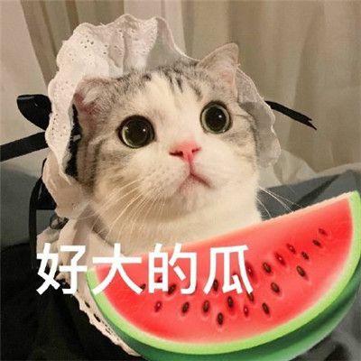 吃瓜专用表情包合集完整无水印版图片2