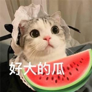 吃瓜专用表情包大全图3