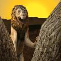 野生狮子生存模拟器中文版
