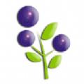 蓝莓资讯转发赚钱APP红包版 v1.40