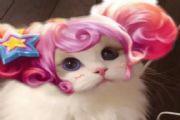 王者荣耀猫咪接头头像大全:猫咪头像无水印制作方法[多图]