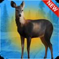 免费猎鹿3D游戏