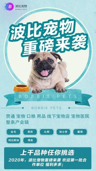 波比宠物区块链APP邀请码图3: