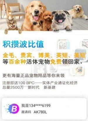 波比宠物区块链APP邀请码图片1