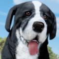 宠物狗农场模拟器游戏