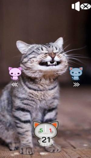 你是合格的猫奴吗游戏安卓版图片1