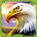 猎鹰模拟器3D破解版