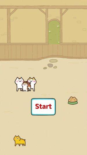 Funny Cat游戏图3