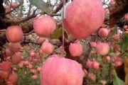 多福果园能免费领水果吗?多福果园免费领水果条件方法[多图]