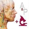 解剖和生理学APP破解版
