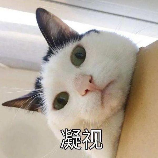 抖音猫猫又能有什么坏心眼表情包gif版分享图片1