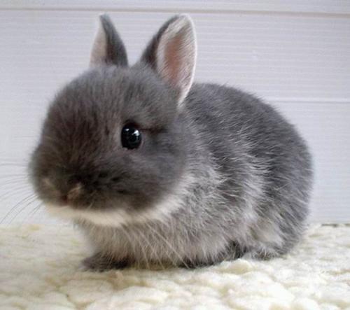 兔子喜歡吃什么食物 兔子更喜歡吃胡蘿卜還是牧草螞蟻莊園[多圖]
