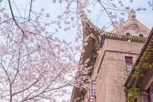2021武汉大学樱花预约 网上预约图2