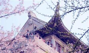 2021武汉大学樱花预约 网上预约图3