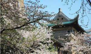 2021武汉大学樱花预约 网上预约图4