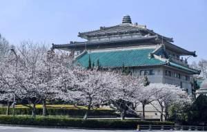 2021武汉大学樱花预约 网上预约图1