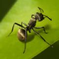 planet ant游戏