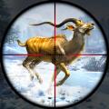 鹿狩猎现场最新版