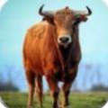 俺是一头牛游戏最新安卓版 v1.0.0