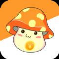 生錢蘑菇APP