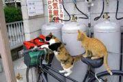 爆笑?图:终于知道为什么自行车......[多图]