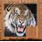Tiger拼圖