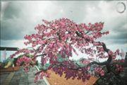 禅意花园评测 画面唯美的休闲类游戏[多图]