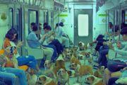 《炉石传说》真人广告 车厢遍地是狗狗[多图]
